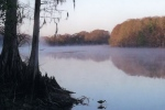 Lake Griffin State Park A Florida State Park Located Near